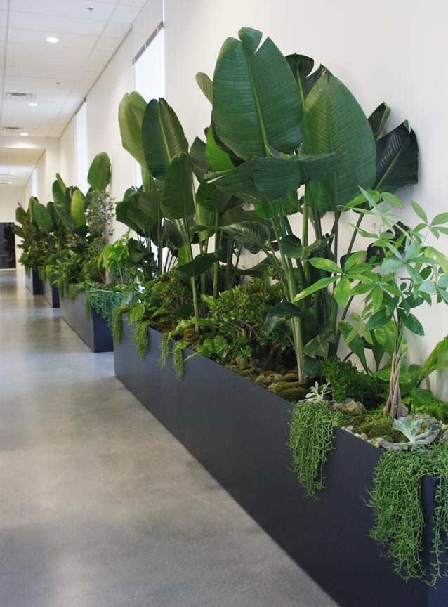 Interior Plant Design  Botanical Art  and Premium Plantscapes     commercial interior plantscape