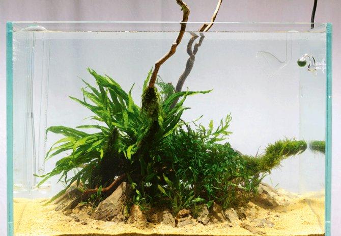 Inspirational aquariums: Low maintenance 'island' tank ...