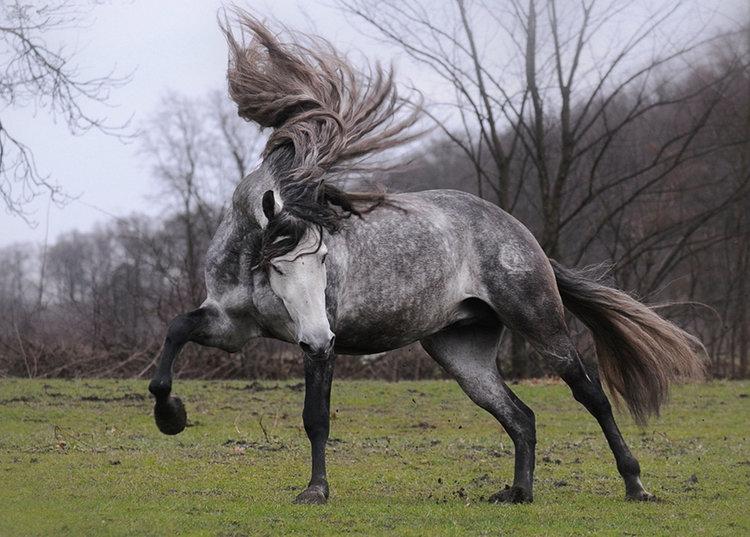 Loud Laugh Out Horse