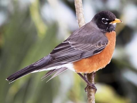 Winter Backyard Birds — South Carolina Wildlife Federation