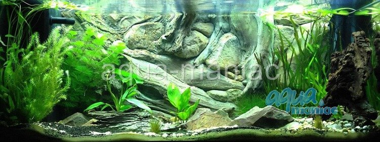 Where Buy Aquarium Plants Online