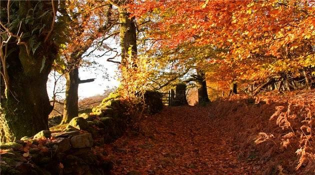 Best Foliage Fall Us