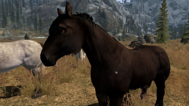 realistic horse breeds # 5