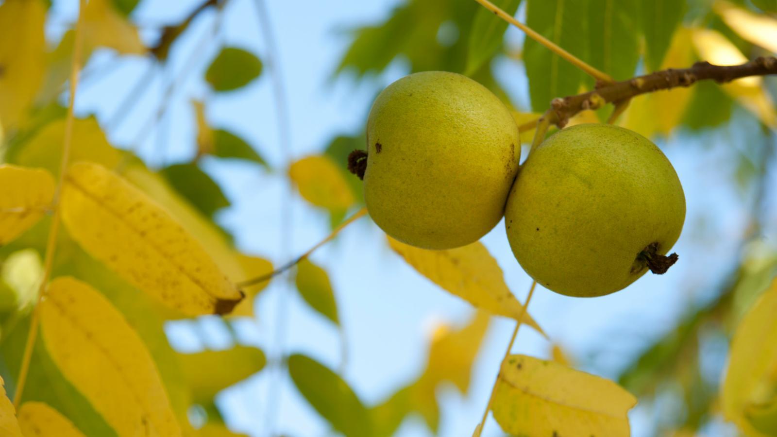 Indiana Common Plants