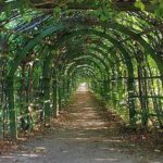 The arch for grapes is also a pergola, only with a modified shape of the upper part