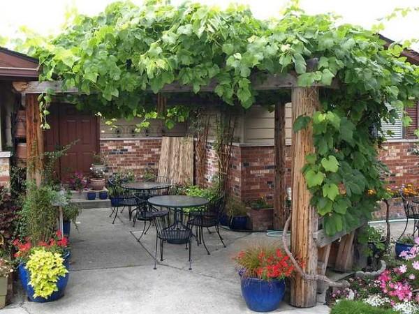 Pergola canopy near the vine house - dense shade even at noon