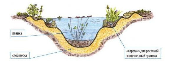 Өсімдіктердің түбін қалай дұрыс жасауға болады. Тоғанның орналасуы әр түрлі деңгейде, тастарды ыдырап, оларға кішкене топырақты құйып, аздап топырақ пайда болады