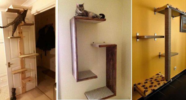 Hylder til katte - navnet er klart ikke-tilfældigt ...