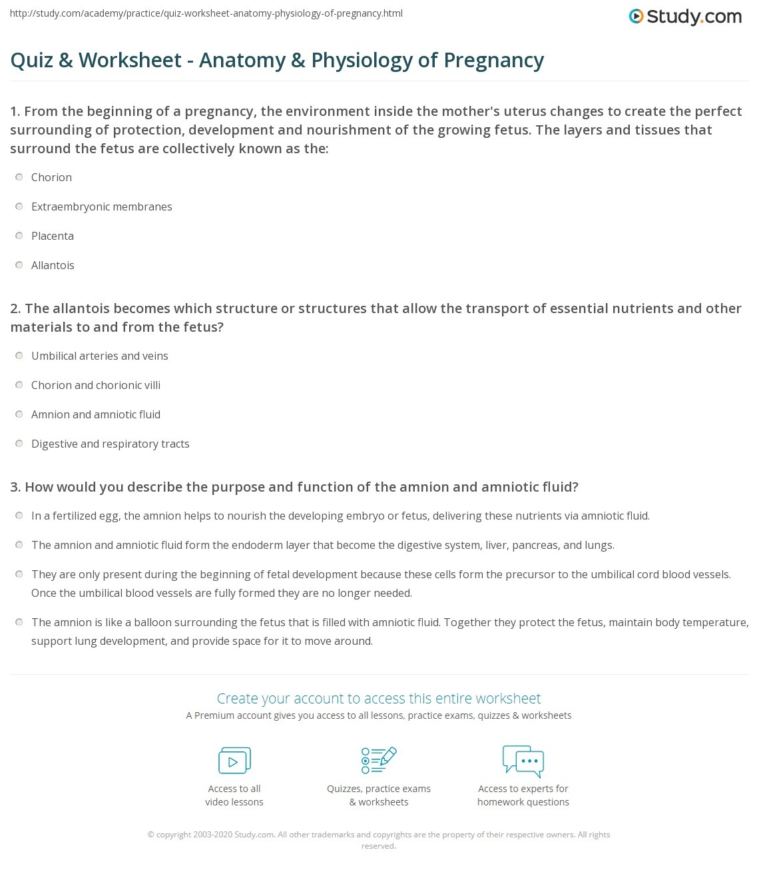 Quiz W Ksheet N Tomy Physiology Of Pregn Ncy Study