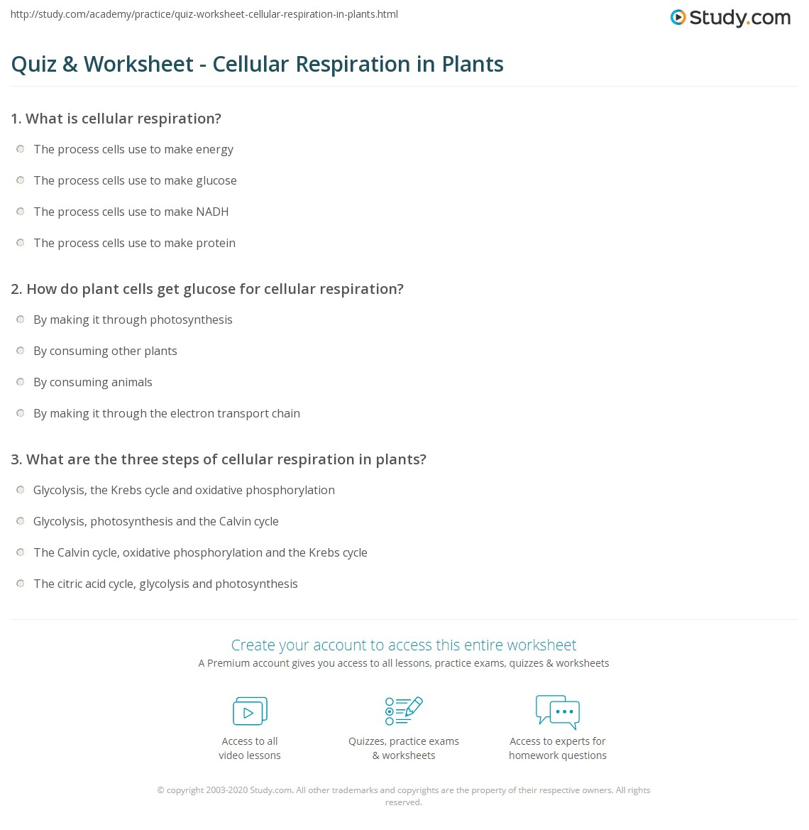 Quiz W Ksheet Cellul R Respir Ti Pl Nts Study