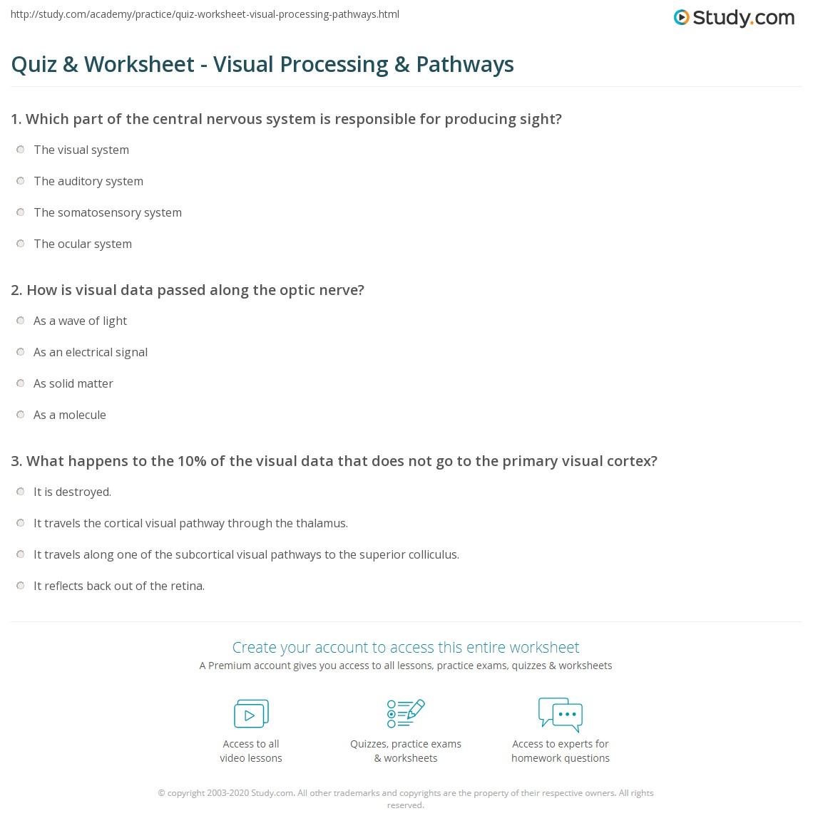 Quiz W Ksheet Visu L Process G P Thw Ys Study