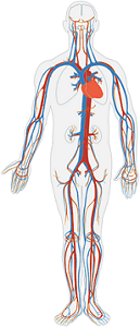 What Is an Organ System? - Definition & Pictures - Video ...