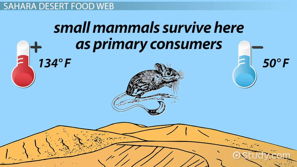 The Food Web of the Sahara Desert - Video & Lesson ...