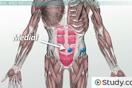 interior inferior anatomical definition interior » 4K Pictures | 4K ...