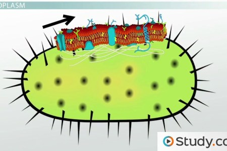 Pictures of bacterial cell full hd maps locations another world diagrams bacteria diagram newest bacterial cell structure diagram bacteria diagrams diagram of bacterial cells best of diagram a bacteria cell cool ccuart Choice Image
