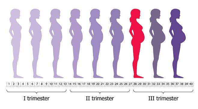 1 10 Twins 14 Identical 8 Weeks Ultrasound
