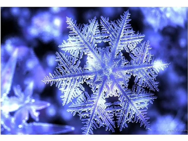 images of snowflakes - 956×565