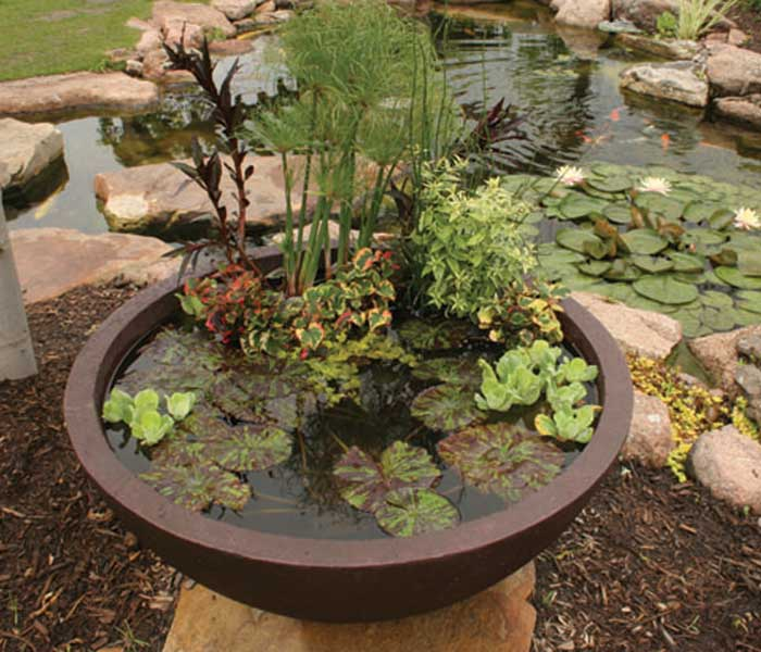 Small Fish Pond Containers
