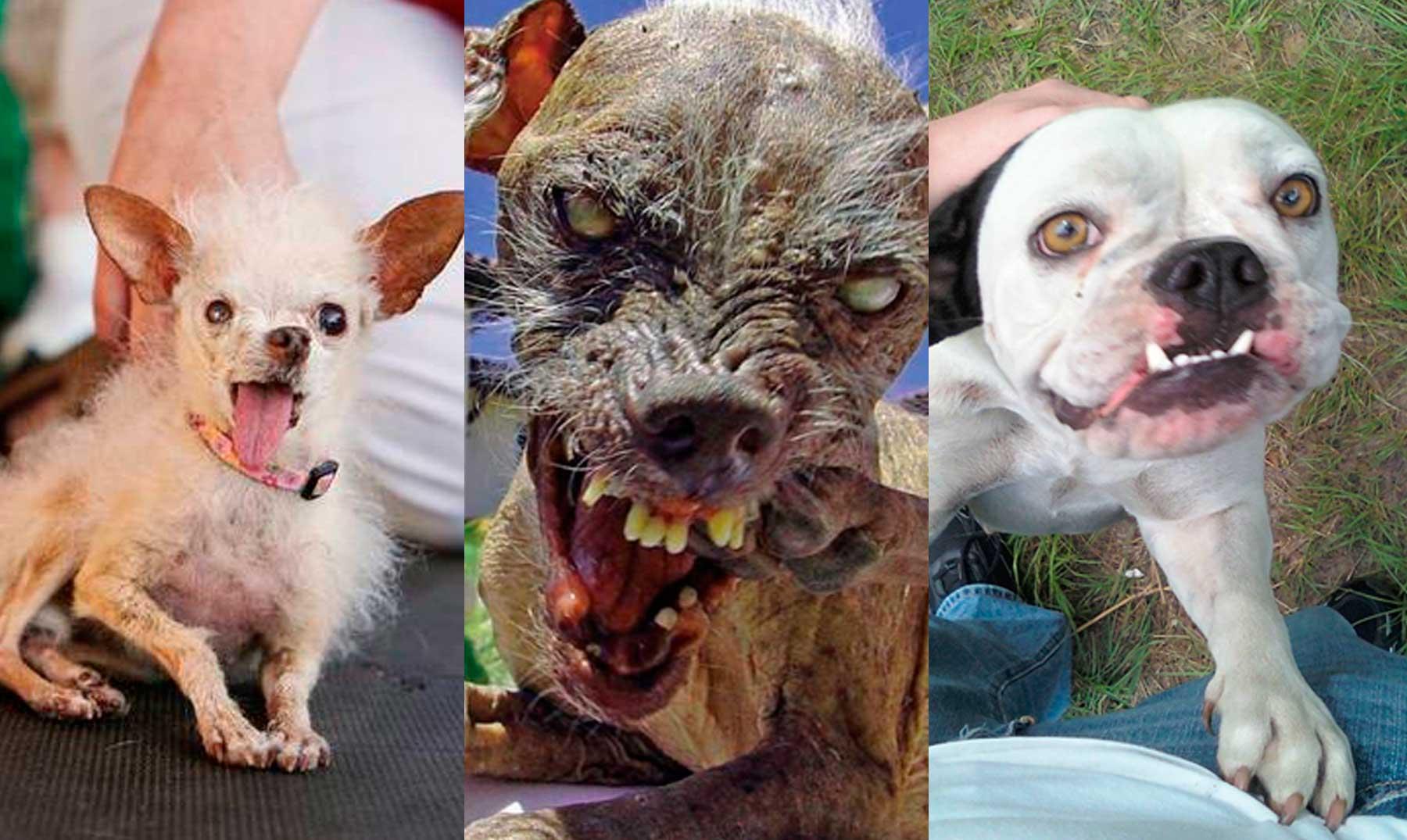 Imagenes De Perros Y Gatos Lindos
