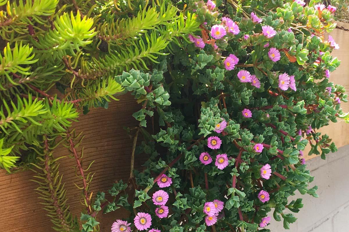 Hanging Flower Baskets Indoor
