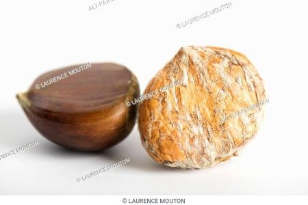 Decorticate Stock Photos and Images   age fotostock Chestnuts