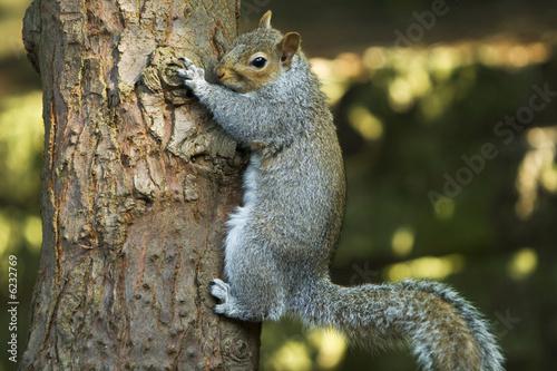 Back Squirrel Climbing Tree