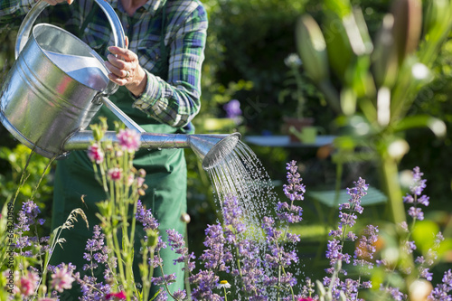 people gardening pictures - HD1108×831