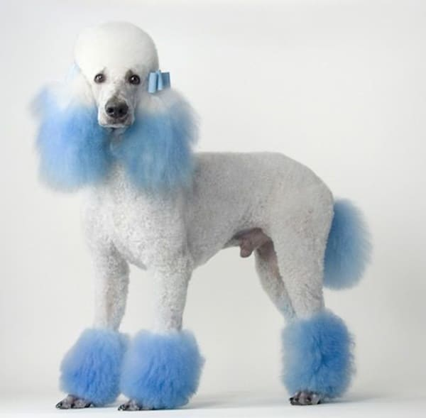 Small Dog Grooming Styles