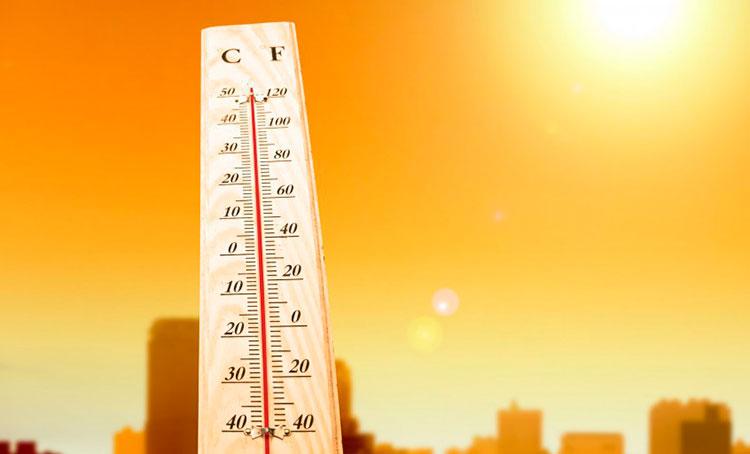 Воздействие на тараканов высокой температурой