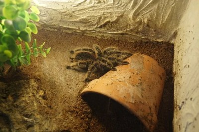 Tarantula Enclosure - Tarantula Friendly