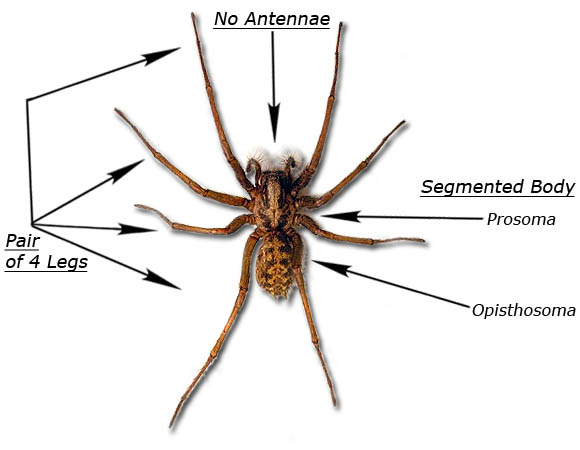 Arachnids - Pictures, posters, news and videos on your ...