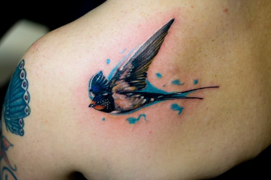Sparrow Tattoos Ideas Free Pictures Of Sparrow Bird Tattoos Ideas And Designs