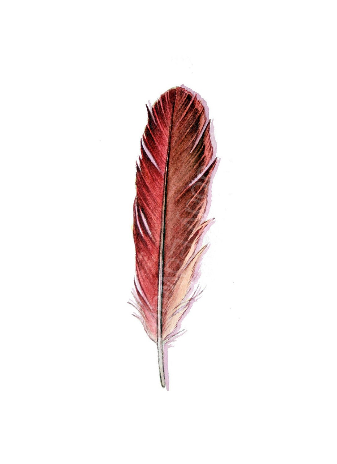 Cardinal Feather Tattoo Pinterest Red Feather Ideas And Designs