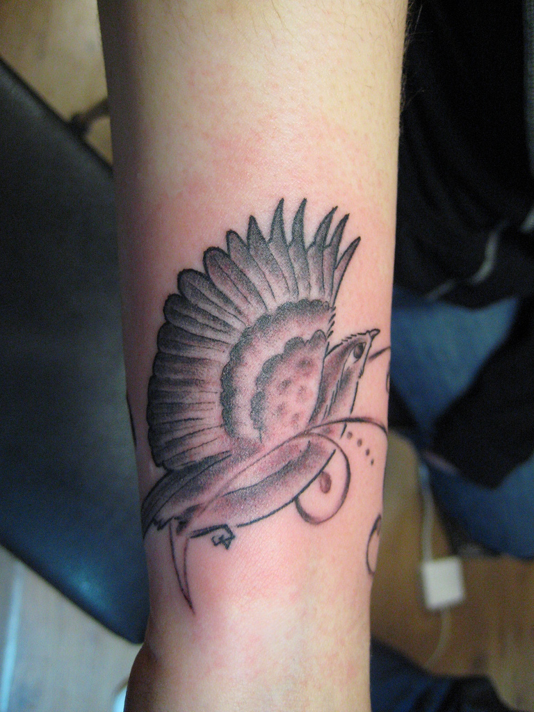 Bird Tattoos Stunning Bird Tattoo Designs Ideas Ideas And Designs