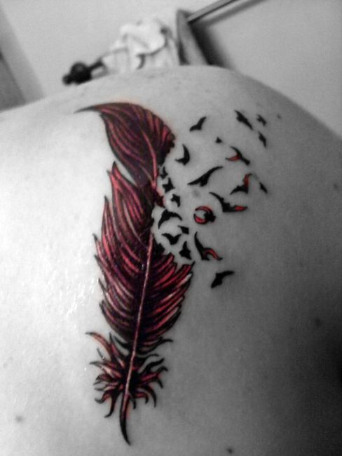 Feather Tattoo Images Designs Ideas And Designs