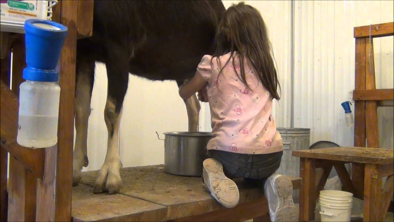 Jade 5 Years Old Milks Thalia The Goat Youtube Ideas And Designs