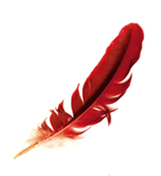 Cardinal Feather Tattoo Would Like To Get Something Like Ideas And Designs