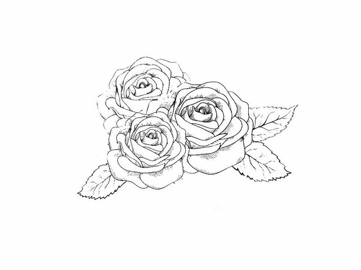Rose Tattoo Outline Tattoos For Thought Pinterest Ideas And Designs