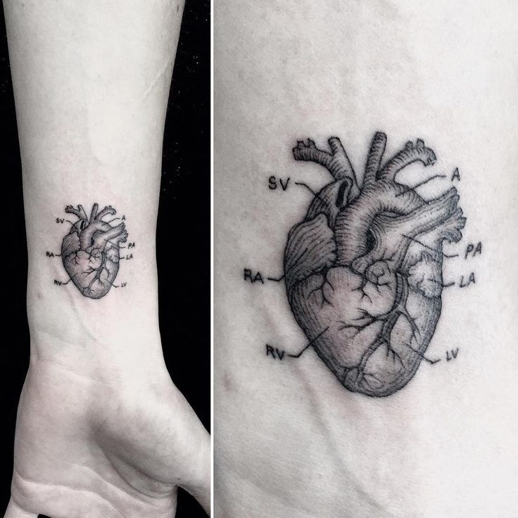 Top 25 Best Anatomical Heart Tattoos Ideas On Pinterest Ideas And Designs