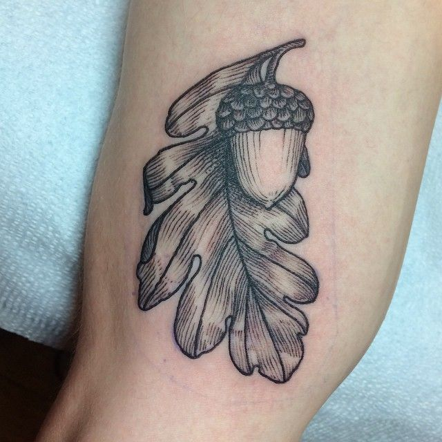 Best 25 Acorn Tattoo Ideas Only On Pinterest Pinecone Ideas And Designs