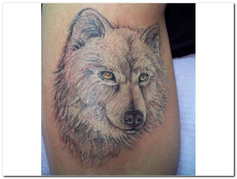 Wolf Tattoo Designs Design Art Blogspot 3D Wolf Tattoo Ideas And Designs