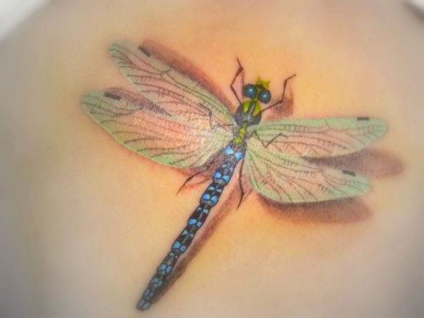 Dragonfly Tattoo Designs View More Tattoos Pictures Ideas And Designs