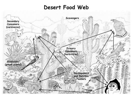 Food Web Interaction - SAHARA DESERT:)