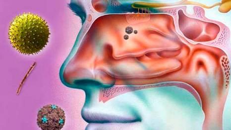 Откуда берутся сопли в носу у человека