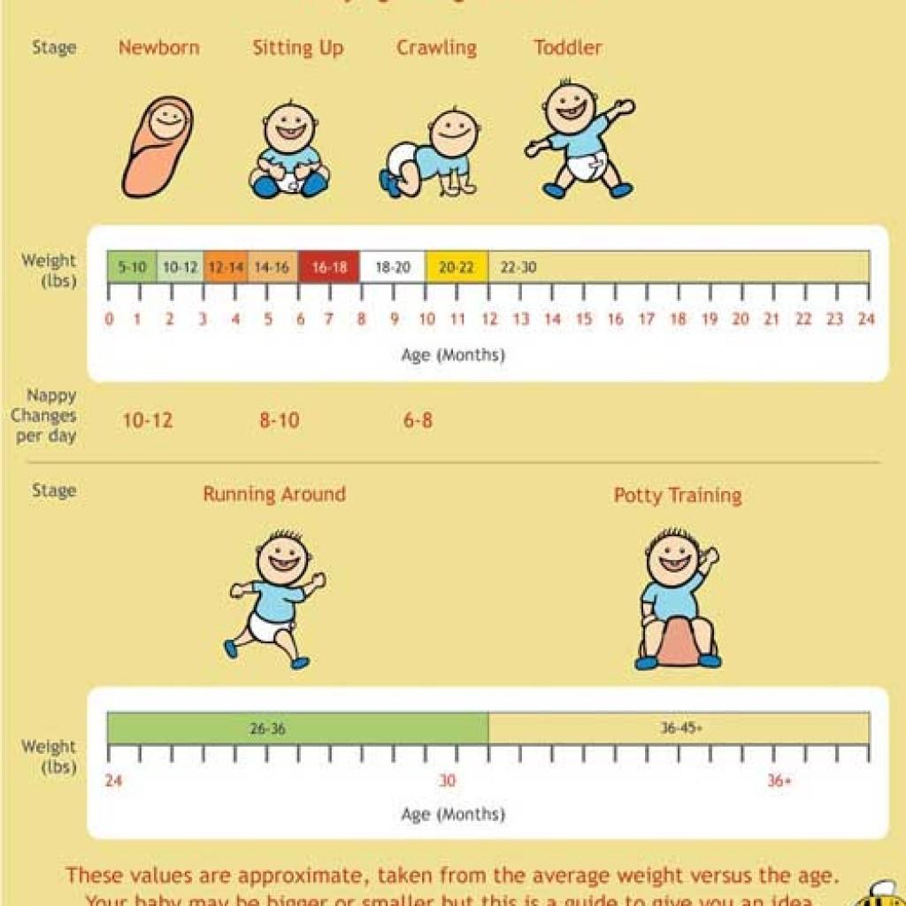 Babycenter Pregnancy Timeline