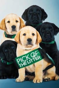Nonton Film Pick of the Litter (2018) Subtitle Indonesia Streaming Movie Download