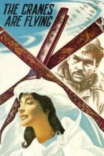 Nonton Film The Cranes Are Flying (1957) Subtitle Indonesia Streaming Movie Download