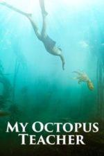 Nonton Film My Octopus Teacher (2020) Subtitle Indonesia Streaming Movie Download