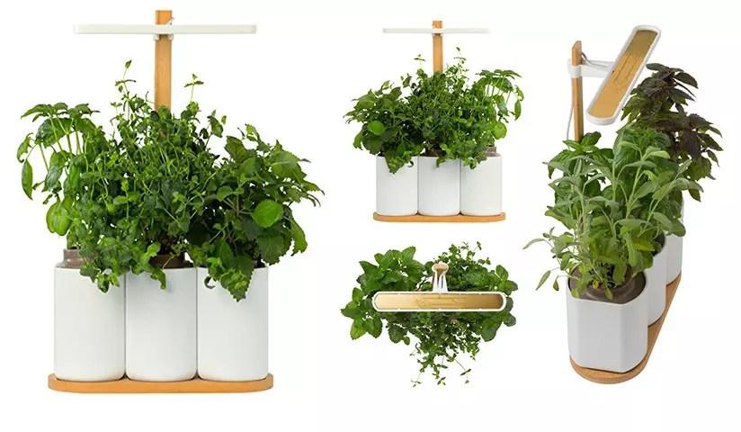 Smart Lilo conectado parche vegetal interior