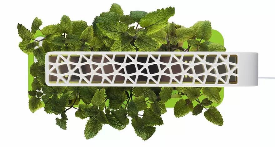 Click & Grow Smart Herb Garden - Jardinera de interior